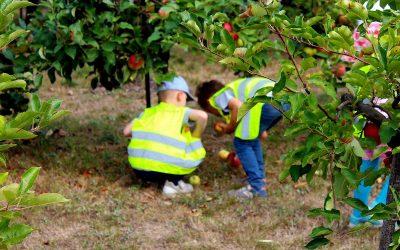 Naturprodukt: Keltern mit Vorschulkindern