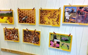 Bienenprojekt in der Marienkäfergruppe
